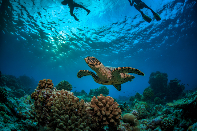 Les Seychelles créent une vaste réserve maritime