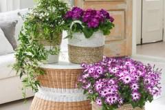 Plante d'intérieur du mois: les beautés froides