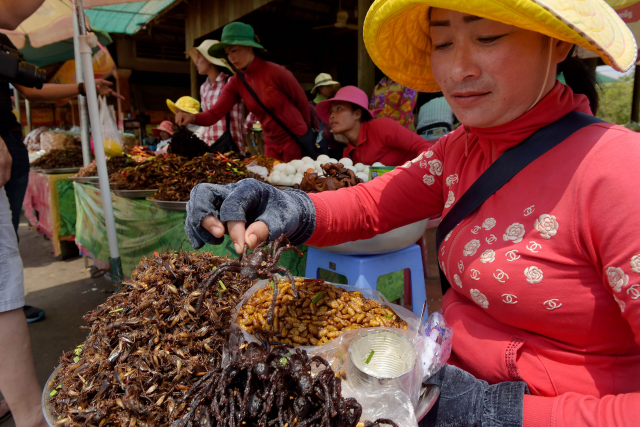 Les tarentules, victimes de la déforestation et des gastronomes au Cambodge