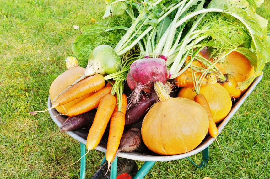 Le jardin communautaire Souligny sera amputé de 62%