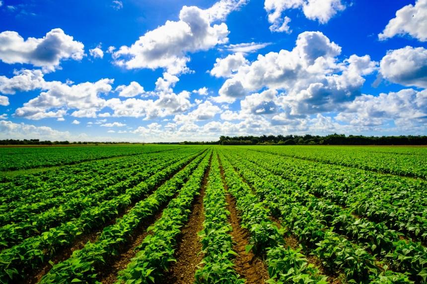 100 % bio dans nos assiettes en 2050? Peu probable