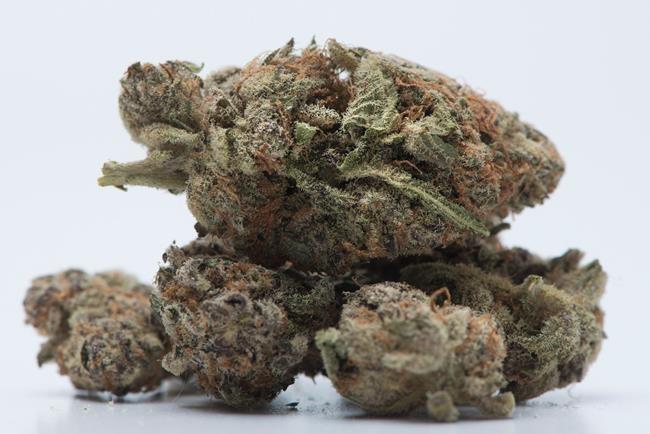 Cannabis: Le projet de loi renvoyé au Sénat
