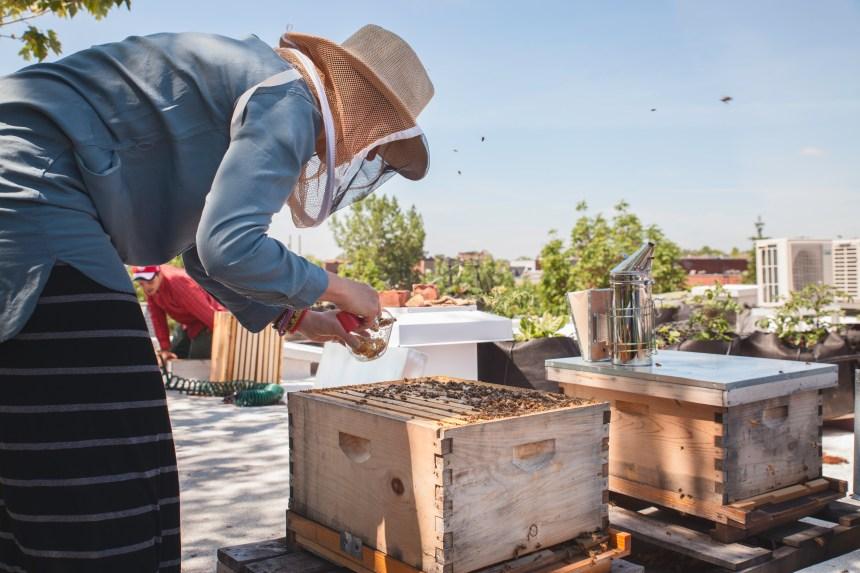 Des ruches urbaines arrivent sur Masson