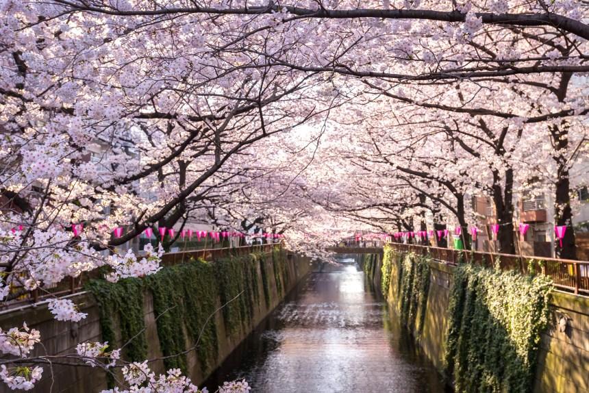 9 jours de Tokyo à Kyoto au temps des cerisiers
