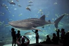 Dans l'eau chaude? Le réchauffement pourrait réduire la vie marine de 17%
