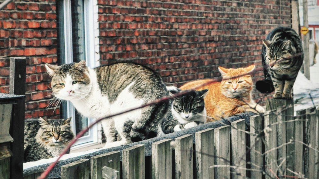 Les chats errants nuisent à la qualité de vie dans sa ruelle, affirme Mme Chazel.