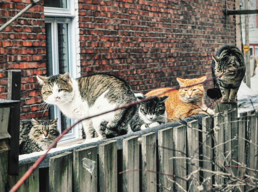 Un problème de chats errants dans une ruelle verte