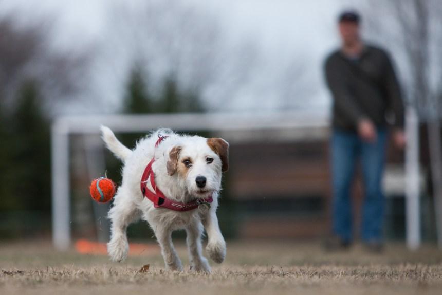 Nouveau parc à chiens dans le Sud-Ouest