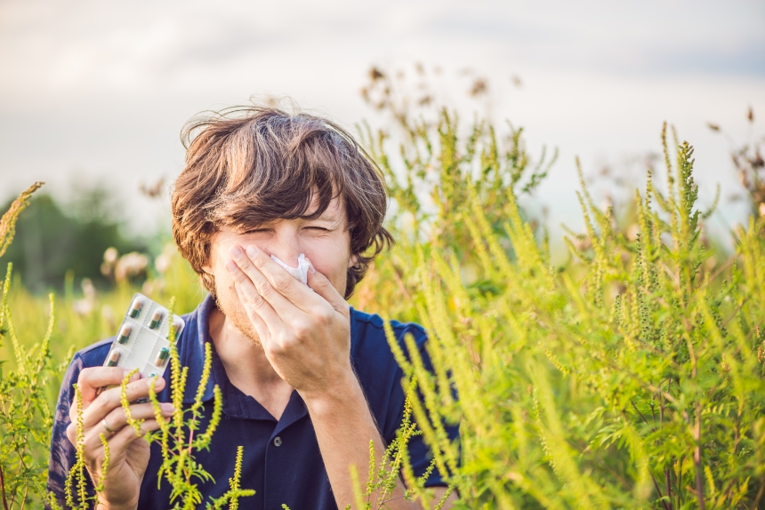 La lutte contre l'herbe à poux se poursuit