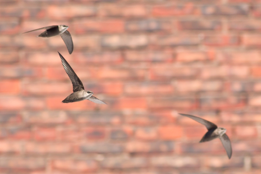 Zoom sur le déclin des oiseaux au Québec
