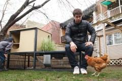 L'élevage de poules séduit des citoyens