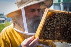 Trois choses que vous ne saviez (probablement) pas sur les abeilles à Montréal
