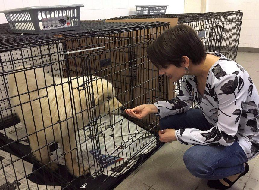 Des chiens sauvés de l'abattoir en Corée du Sud se rétablissent à Montréal