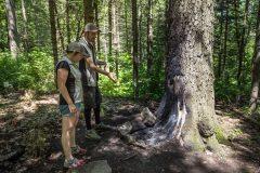 Parc du Mont-Royal: la Ville va fermer des sentiers indésirables et revégétaliser