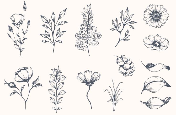 Florilège de fragrances fleuries
