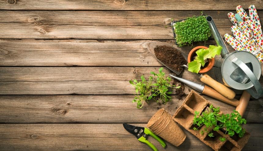 Soigner son jardin avec les plantes en quatre astuces