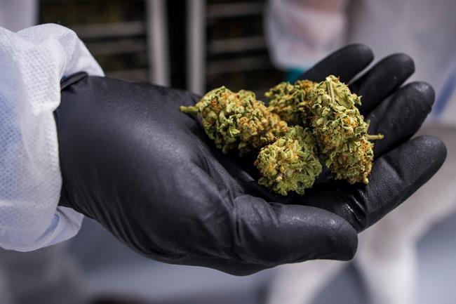 Cannabis: mise en garde des autorités américaines