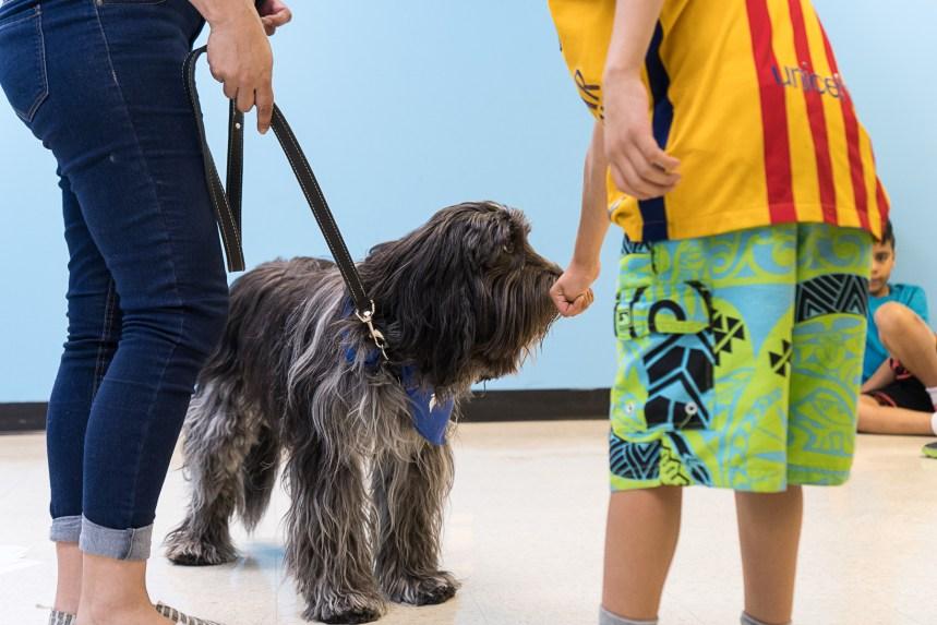 Des ateliers pour réduire les morsures de chien chez les jeunes