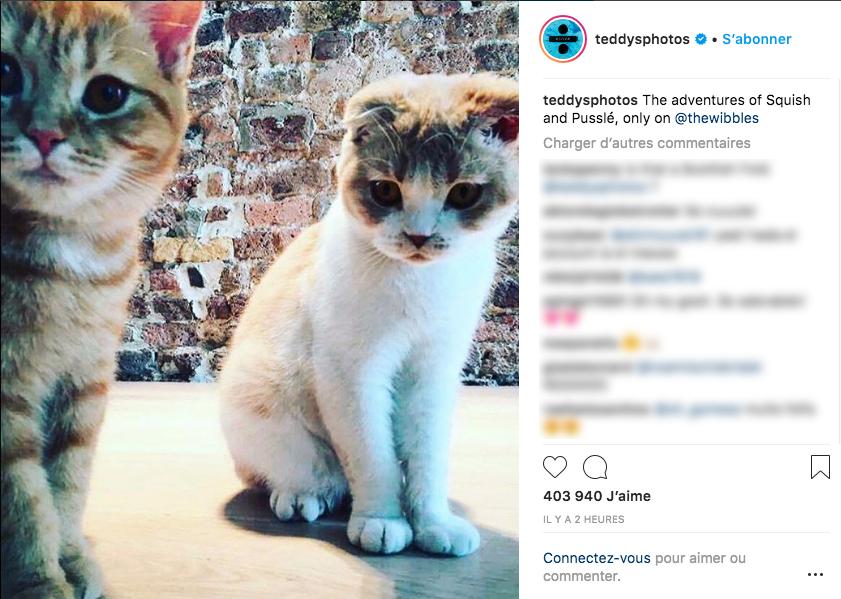 Ed Sheeran ouvre un compte Instagram pour ses chats