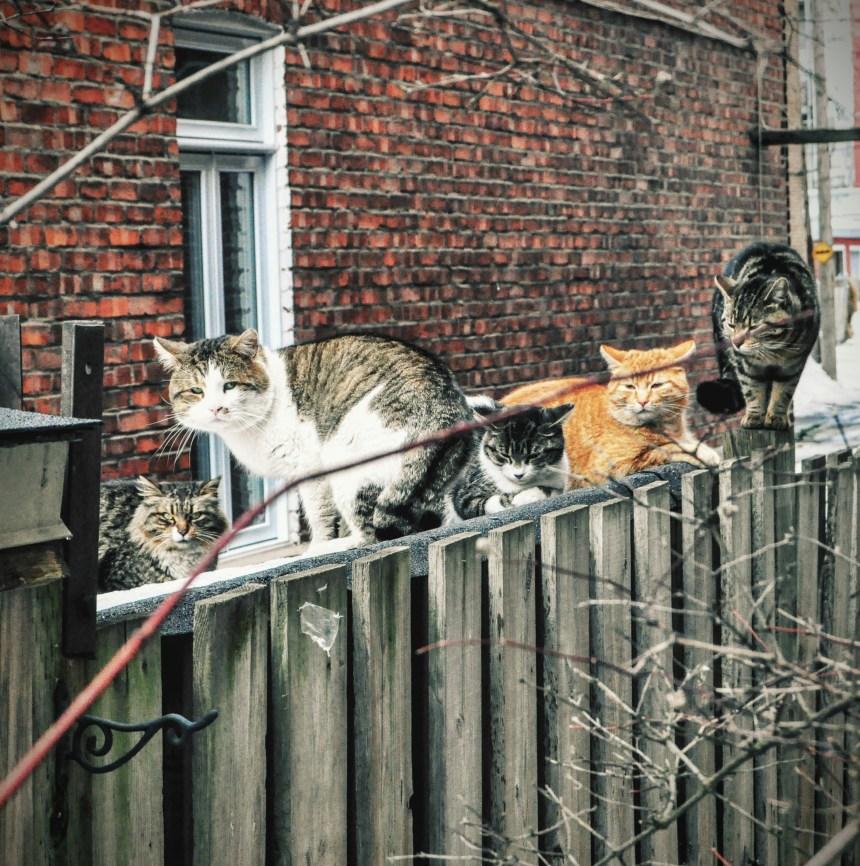 RDP-PAT adopte son programme de stérilisation des chats errants
