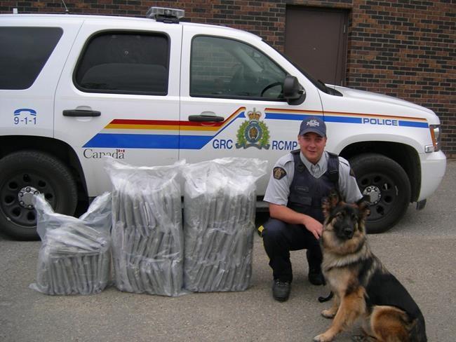 Cannabis: des chiens de la GRC en retraite forcée