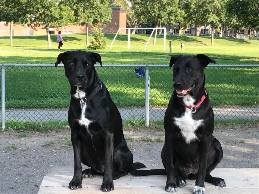 Nouvelle politique réglementant les aires d'exercice canin dans MHM