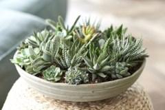 Plante d'intérieur du mois: les plantes grasses