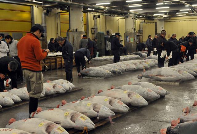Le marché aux poissons de Tsukiji bientôt fermé aux touristes