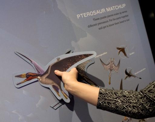 Découverte d'un vieux ptérosaure, premier vertébré construit pour voler