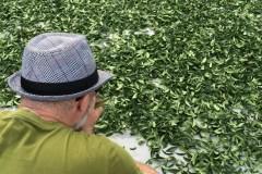Camellia Sinensis: vingt ans de thés