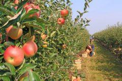 Une «pénurie alimentaire» à prévoir si les travailleurs saisonniers se voient refuser l'entrée