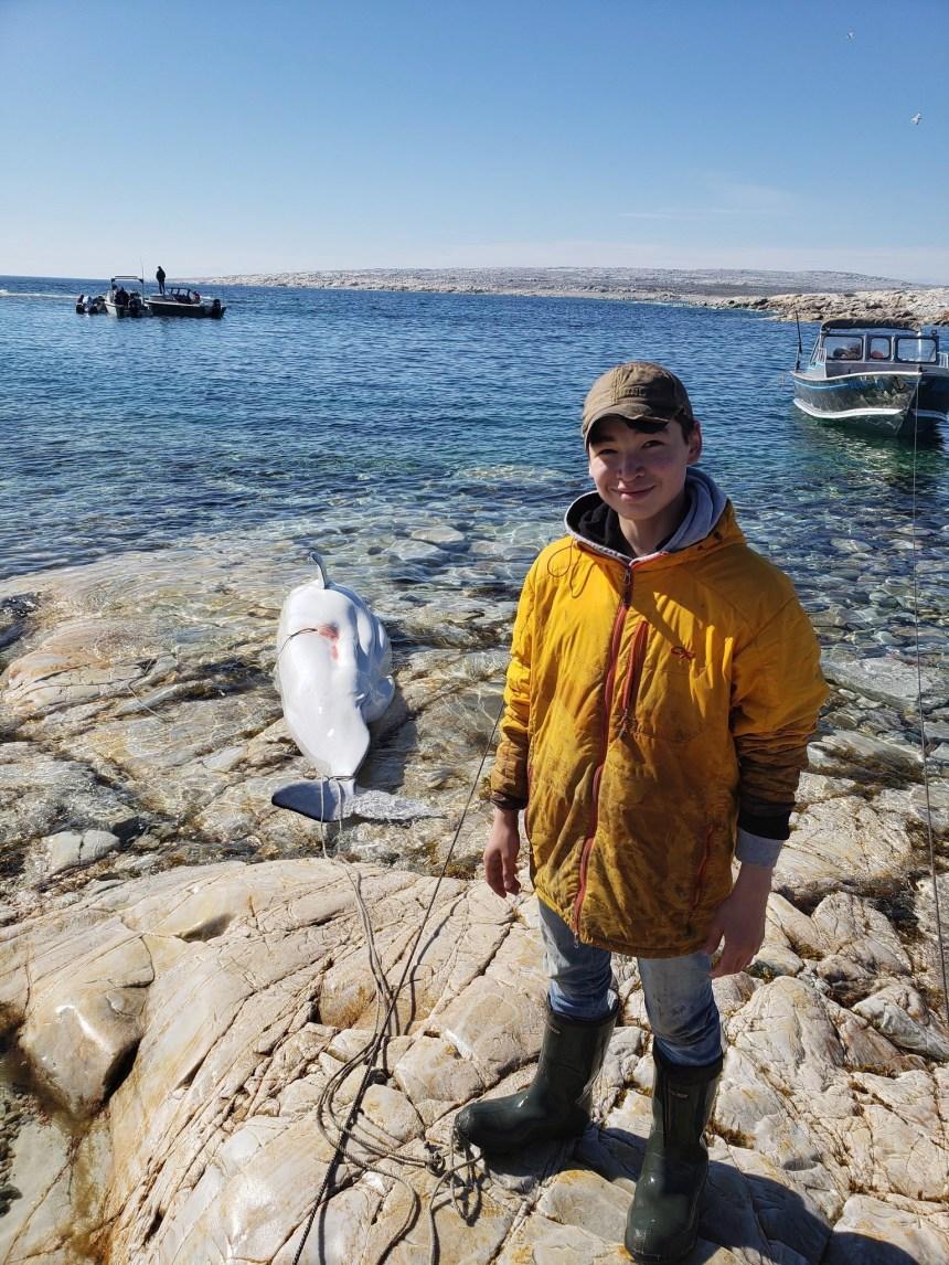 La fierté d'un père Inuit crée un tollé sur Twitter pour la capture d'un béluga