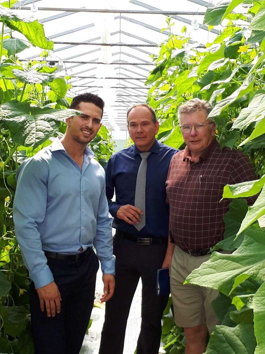 Tomates et concombres bio et hyperlocaux, produits à Saint-Laurent