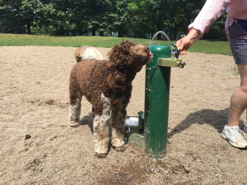 D'autres réfections à prévoir pour l'aire d'exercice canin