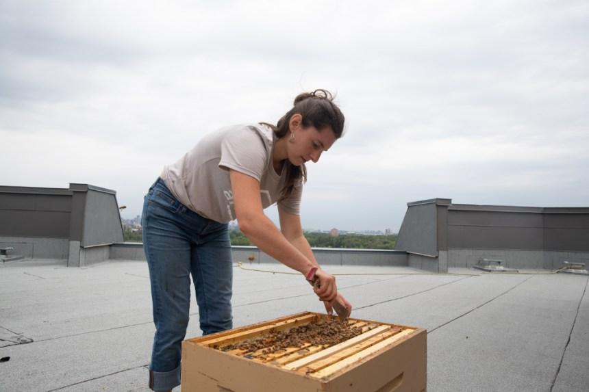 Du miel sur le toit