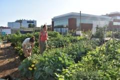 Agriculture: le Québec pourrait-il concurrencer la Californie sur nos tablettes?