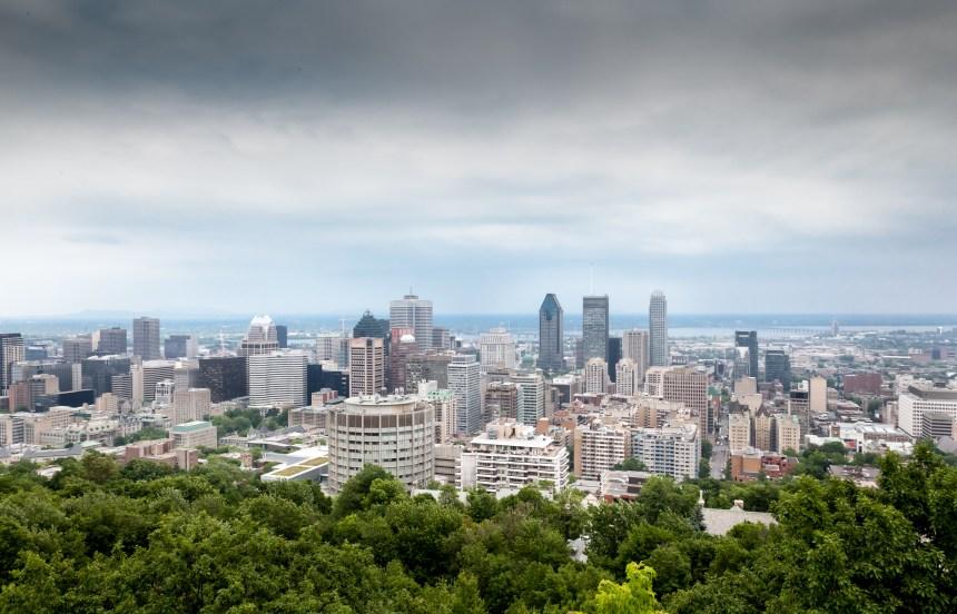 La surprenante faune de Montréal