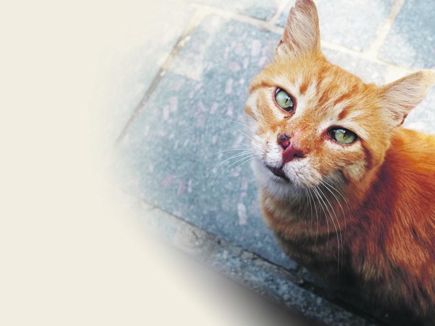 Les chats d'Istanbul, une histoire d'amour