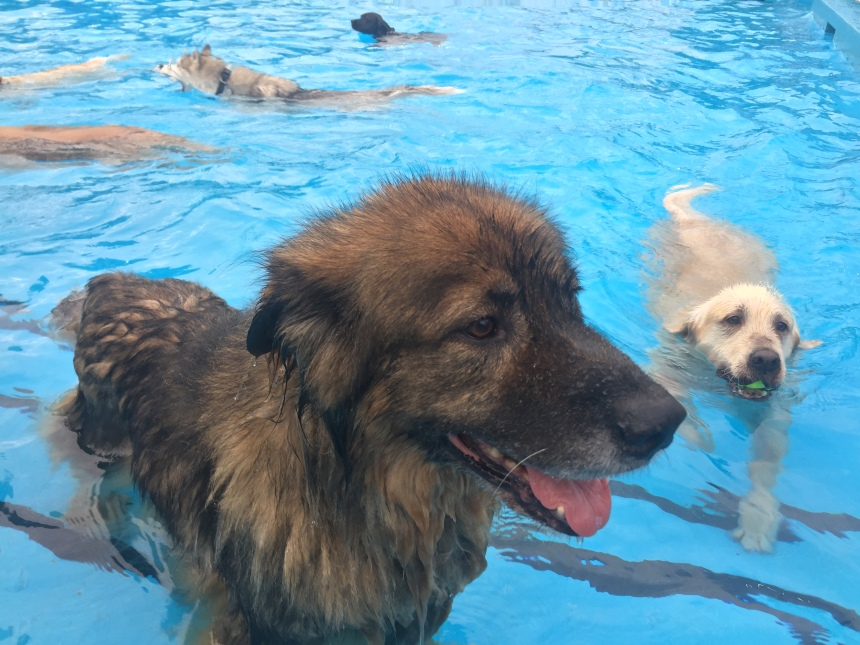 Pooches in the pool for dog adoption centre