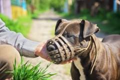 Canton de Potton: remerciements exprimés par la victime d'une attaque de chiens