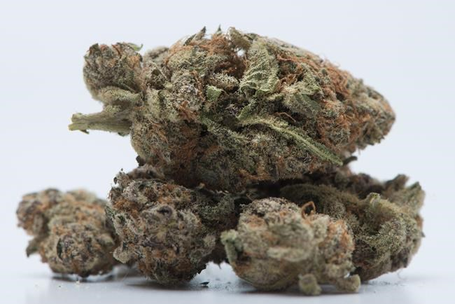 Cannabis: Des mises en garde sur la marijuana plus nuancées