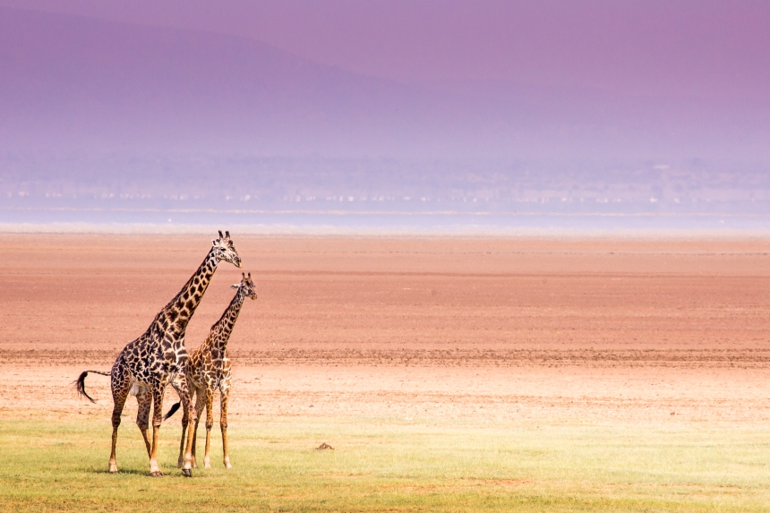 Les grands classiques du nord de la Tanzanie
