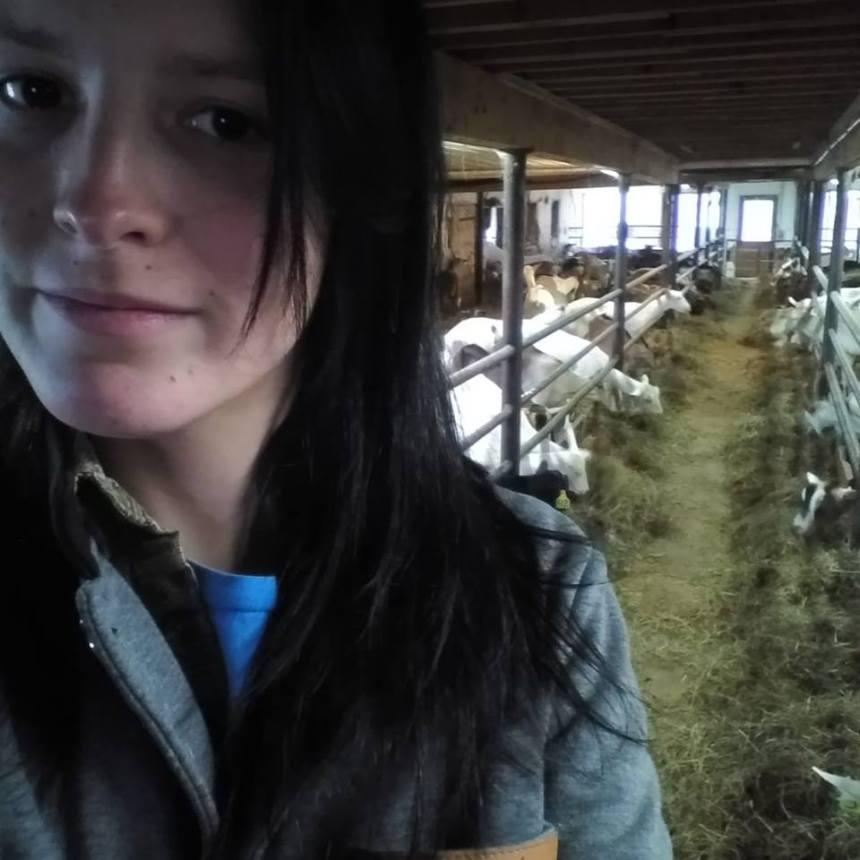 Au bord du gouffre, deux productrices de lait de chèvre québécoises lancent un appel à l'aide