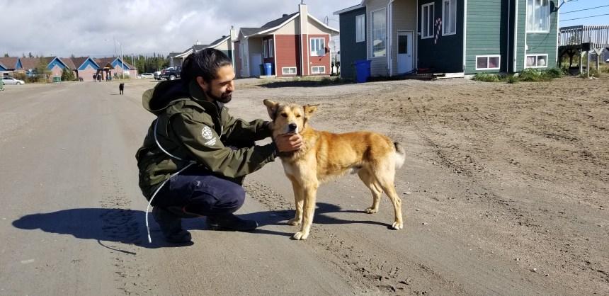 Un organisme de Saint-Henri au secours des chiens errants