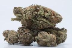Les policiers pourront-ils fumer du cannabis?