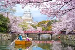 Japon: des cerisiers fleurissent, même si ce n'est pas le printemps