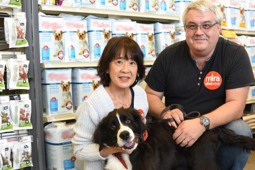 Accueillir un chien Mira dans sa famille