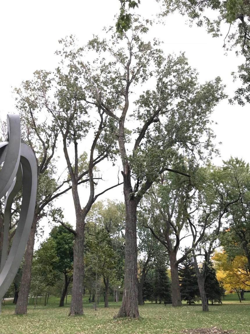 Importante coupe d'arbres dans Pointe-Saint-Charles