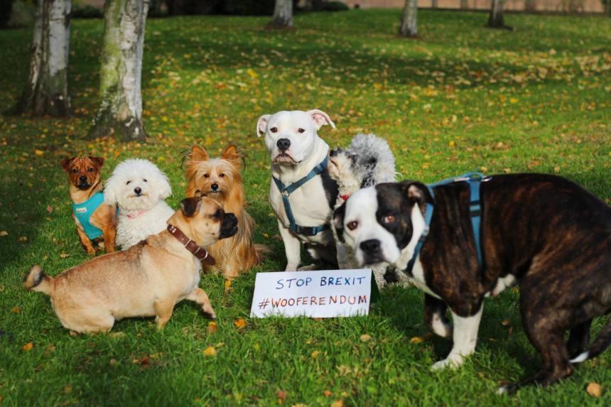 Les chiens manifestent contre le Brexit