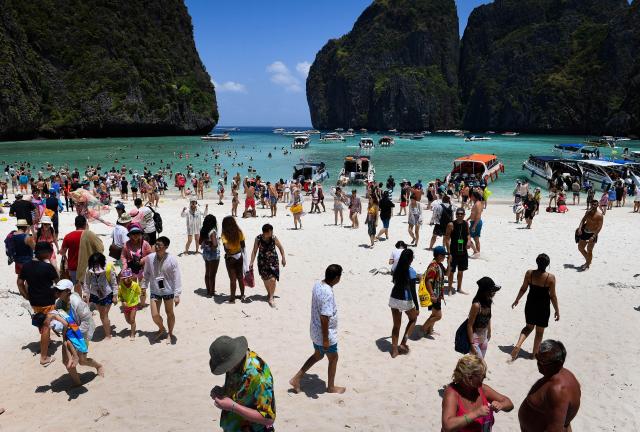 Thaïlande: retour de petits requins à Maya Bay